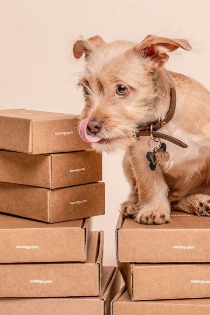 Hund som er klar for å flytte